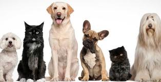 ofertas de empleo veterinaria