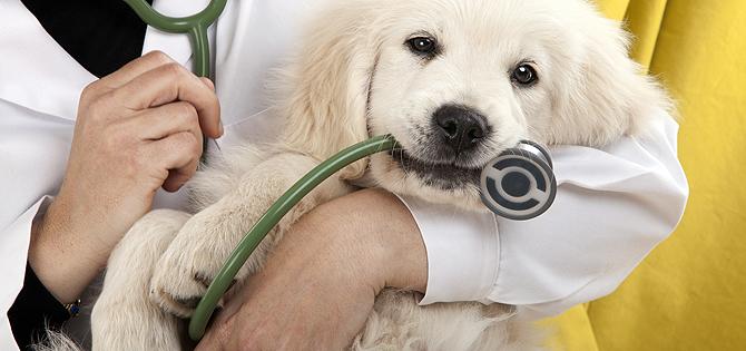 ofertas de empleo en cadiz veterinario